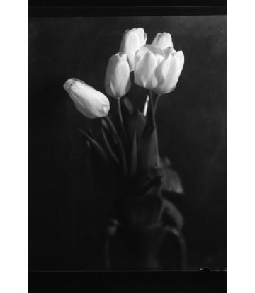 https://www.livinart.it/1116-thickbox_default/tulipani-rosa.jpg