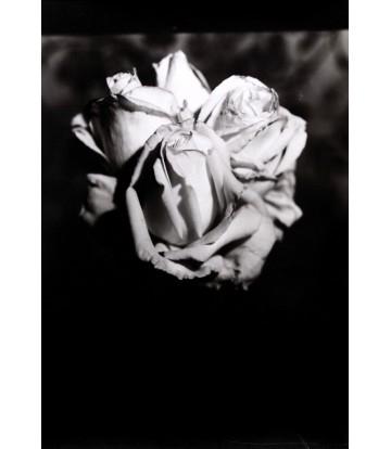 http://www.livinart.it/1224-thickbox_default/rose-4.jpg