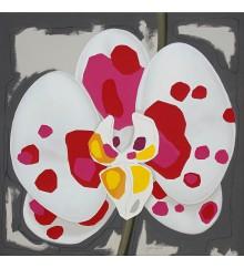 5.1 Orchidee
