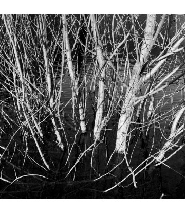 https://www.livinart.it/1341-thickbox_default/trees-3.jpg