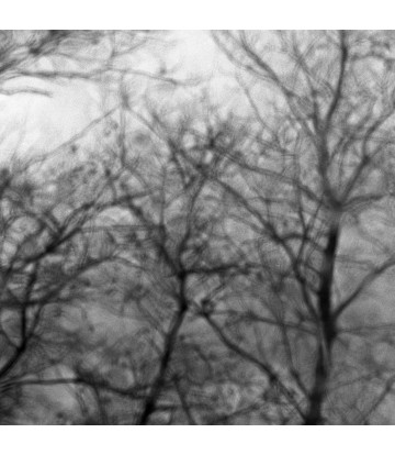 http://www.livinart.it/1343-thickbox_default/alberi-5.jpg