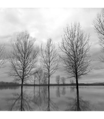 http://www.livinart.it/1344-thickbox_default/alberi-10.jpg