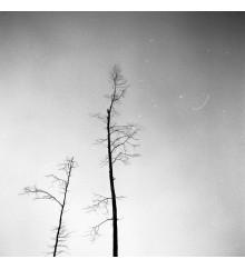 Trees 15