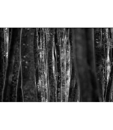 http://www.livinart.it/1435-thickbox_default/alberi-22.jpg