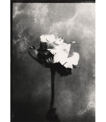 https://www.livinart.it/2020-thickbox_default/fleurs-3.jpg
