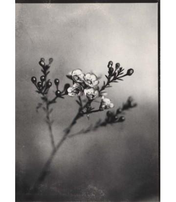 https://www.livinart.it/2048-thickbox_default/fleurs-8.jpg