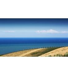 La Linea del Mare 4