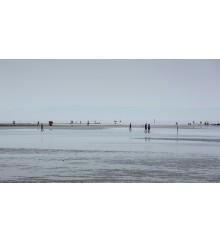 La Linea del Mare con trasferelli 6