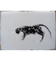 Spotty Cat